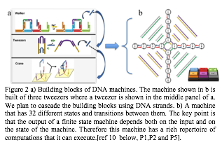 Zone de texte:   Figure 2 a) Building blocks of DNA machines. The machine shown in b is built of three tweezers where a tweezer is shown in the middle panel of a. We plan to cascade the building blocks using DNA strands. b) A machine that has 32 different states and transitions between them. The key point is that the output of a finite state machine depends both on the input and on the state of the machine. Therefore this machine has a rich repertoire of computations that it can execute.[ref 10  below, P1,P2 and P5].
